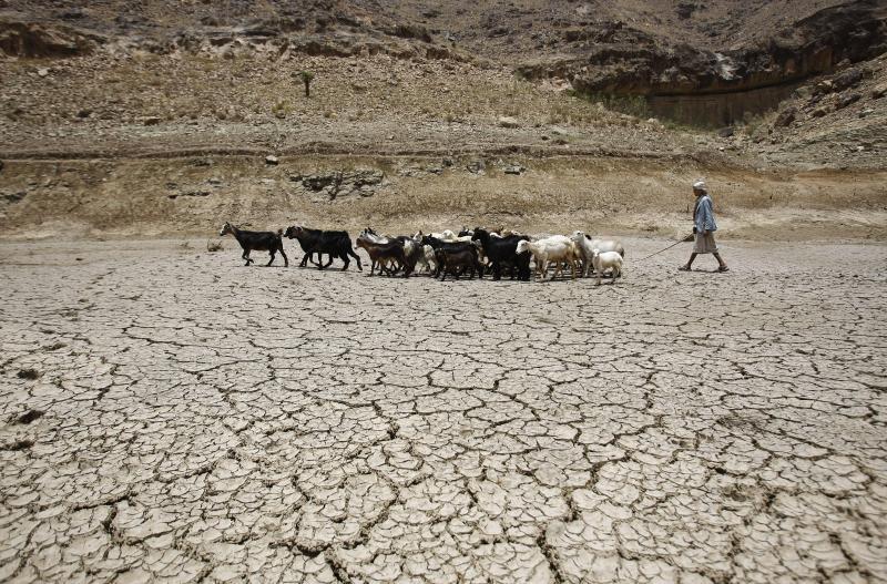 Image result for yemen shepherd