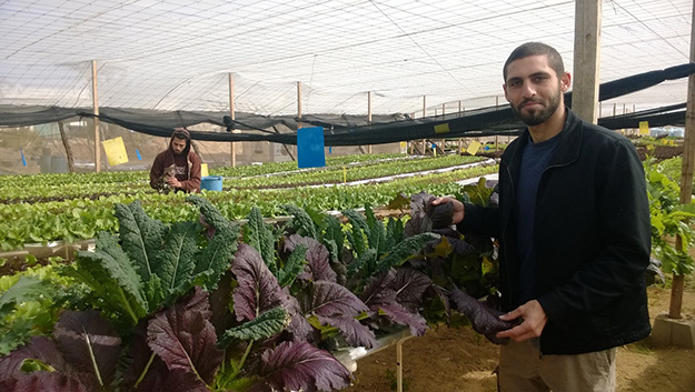 Egypt's Quiet Revolution: Sustainable Agriculture