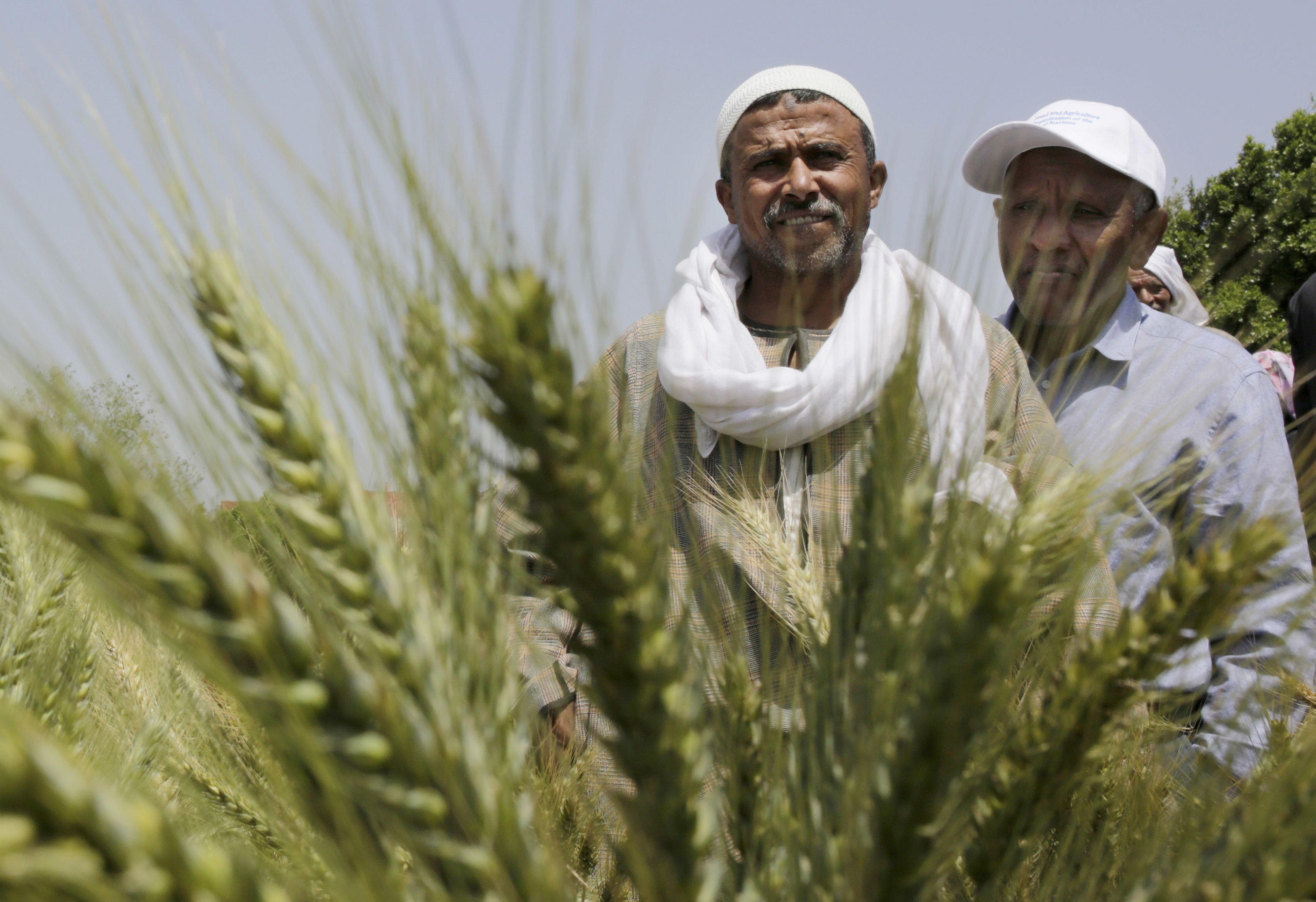 Greening the Egyptian Economy with Agriculture
