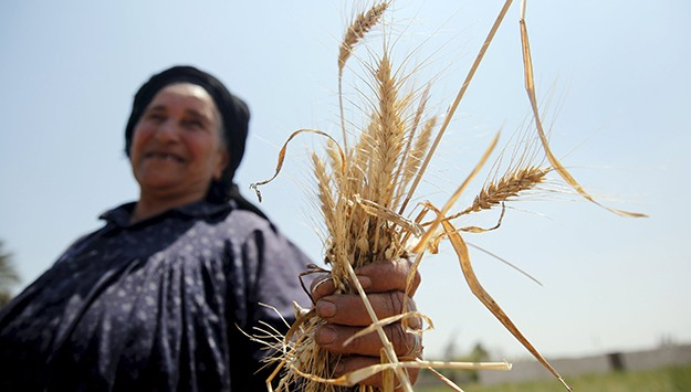 Millions of Women in Egypt at Risk from Climate Change